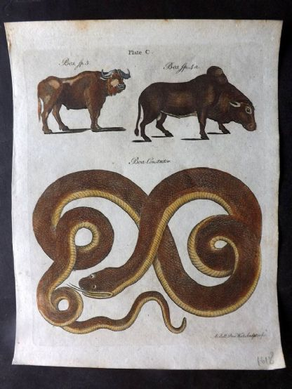 Encyclopaedia Britannica 1797 HCol Print. Bos Cattle & Boa Constructor Snake